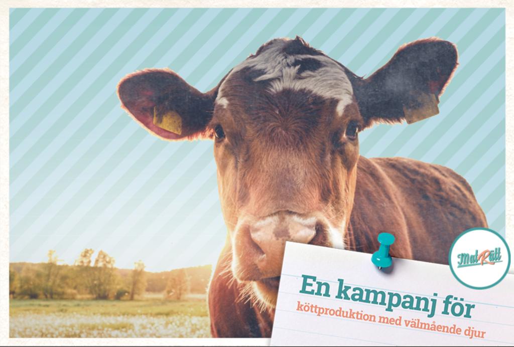 En kampanj för en köttproduktion med välmående djur